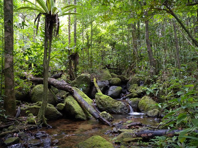 Lowland rainforest, Masoala National Park, Madagascar