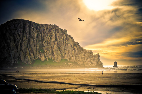 Morro Bay :  Gulls fly as the sun sets