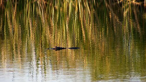 nature wildlife finepixs700