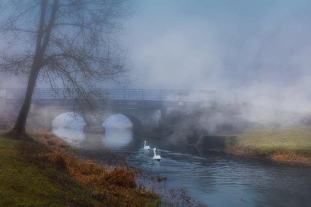 couple de cygnes sur la riviere les tarnauds