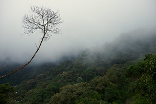 In the mist, in the clouds