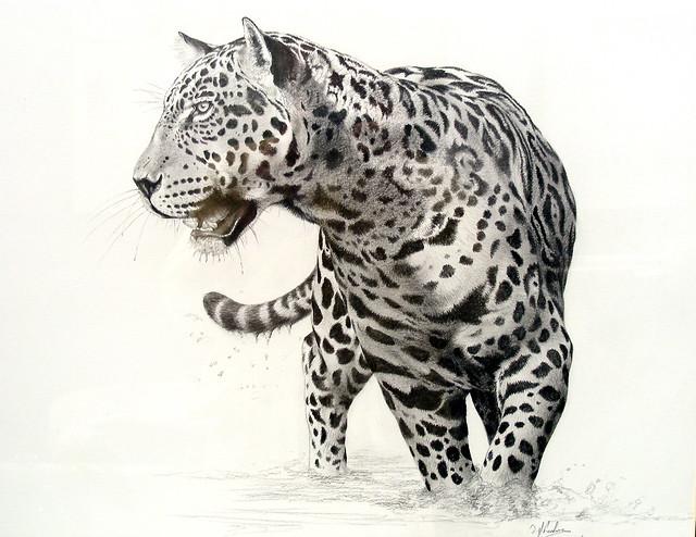 jaguar drawing - photo #19