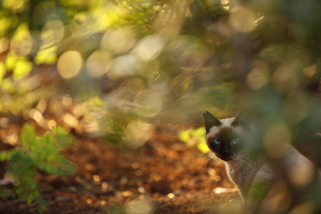 Bokeh Kitty