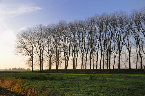 Rij kale bomen - Row of bare trees