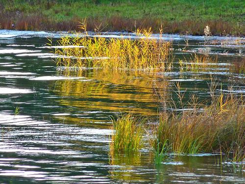friends italy lake sunrise lago italia alba brianza lombardia twop lagodipusiano clickcamera