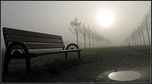 trees holland reflection netherlands fog bench puddle bomen nederland bank must plas reflectie heemskerk landschapspark