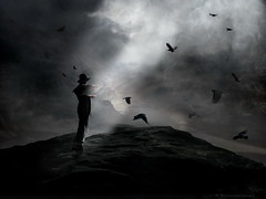 Crows Rock