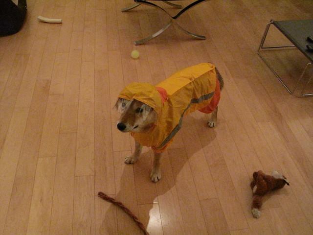 Dog Raincoat Large Breed
