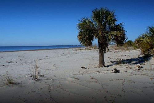beach florida palm indianpass