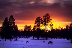 Marshall Lake HDR - Flagstaff, AZ