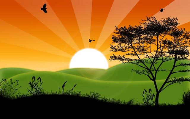 natures sunshine   Flickr - Photo Sharing!