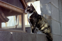 Cats at Suma Beach, Feb. 2002