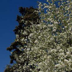 Morristown Spring
