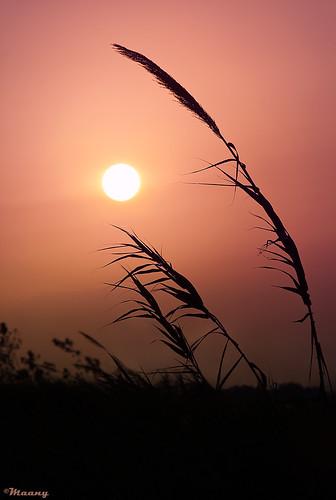 sunset sun beach silhouette iran pentax dreams hopes mazandaran ایران rumi غروب مازندران k100d مولانا خورشید mewlana ضدنور moulavi مولوی فریدونکنار شیدایی