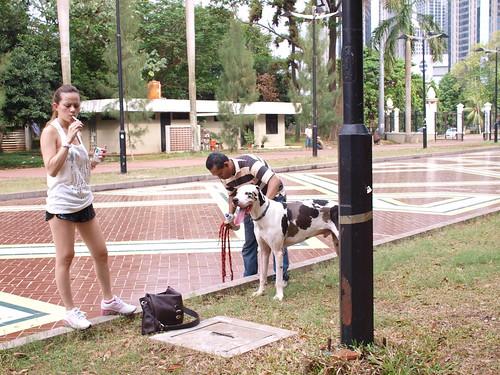 Angeliq or angel lelga, running with his dog istora senayan