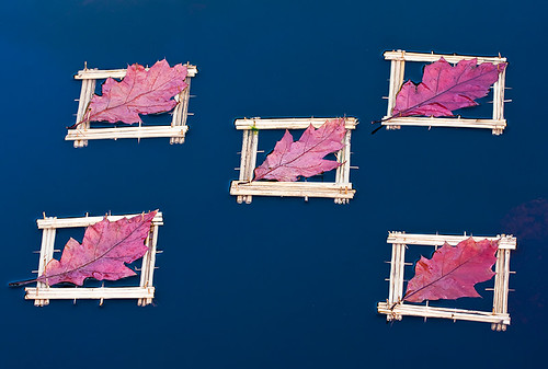 Floating Red Oak Leaf Squares