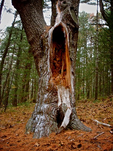 shrieking tree creature