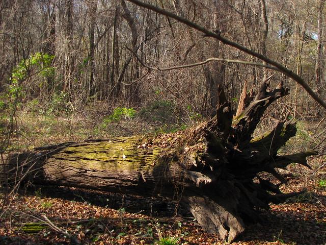 Fallen Tree Farm Bed Breakfast