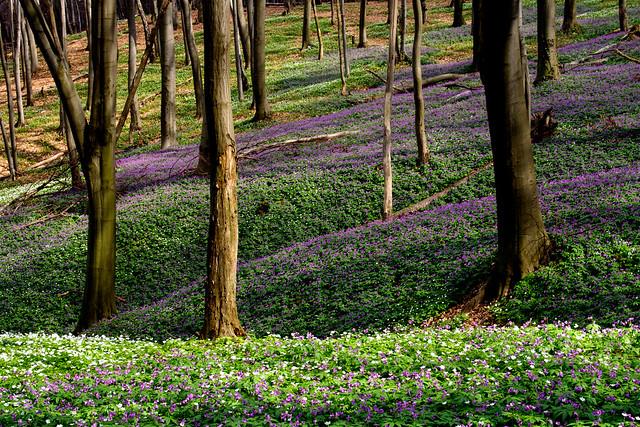 spring flowers in Pogulyanka park. Lviv, Ukraine (парк Погулянка, Львів, Україна)