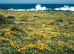 Postberg Spring Flowers - South Africa