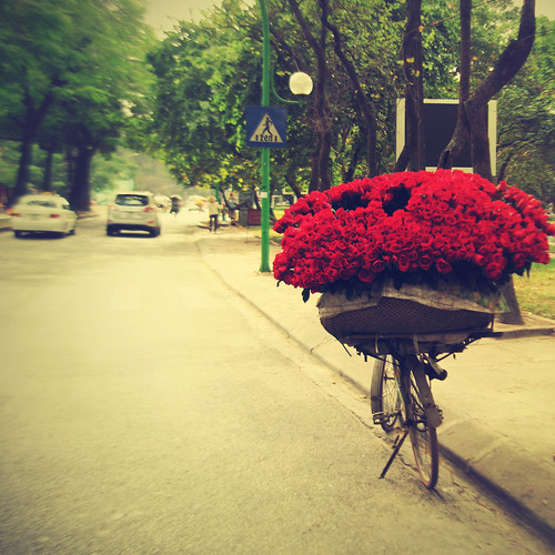 [012/365] ~ A bike of Roses by ♥ Huo Zen ♥