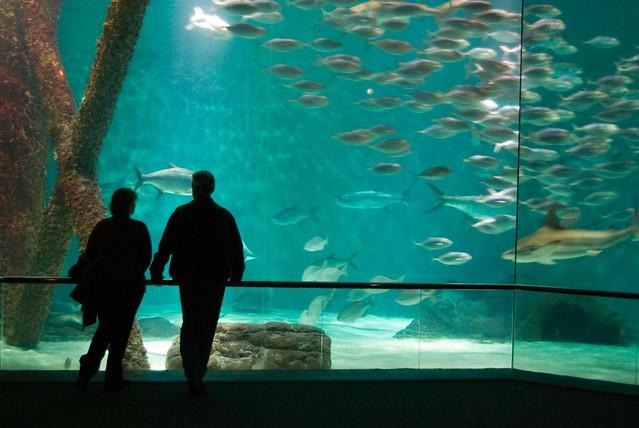Audubon Aquarium Of The Americas 1 Flickr Photo Sharing