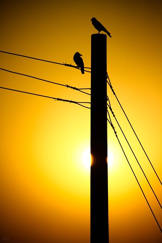 2 sun silhouette electric canon post cable dhaka crows bangladesh 18200mm 1000d aminbazar