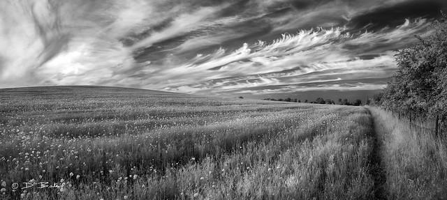 Poppies To The Horizon