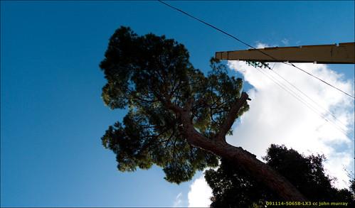 lebanon tree weekend