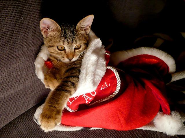 Gatito Noel