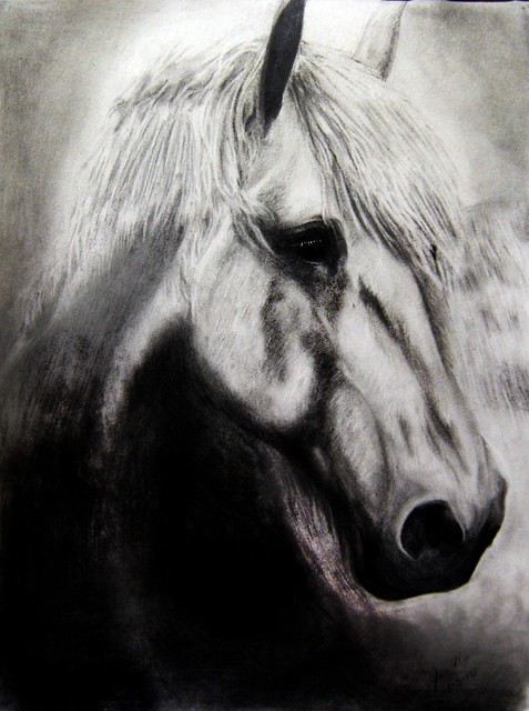 4249541516 880ea68fed z jpgRealistic Horse Drawings