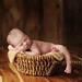 filling a basket by Kelley Ryden