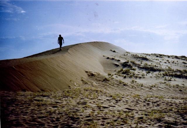 Lone Tree - Mongolia Landscape