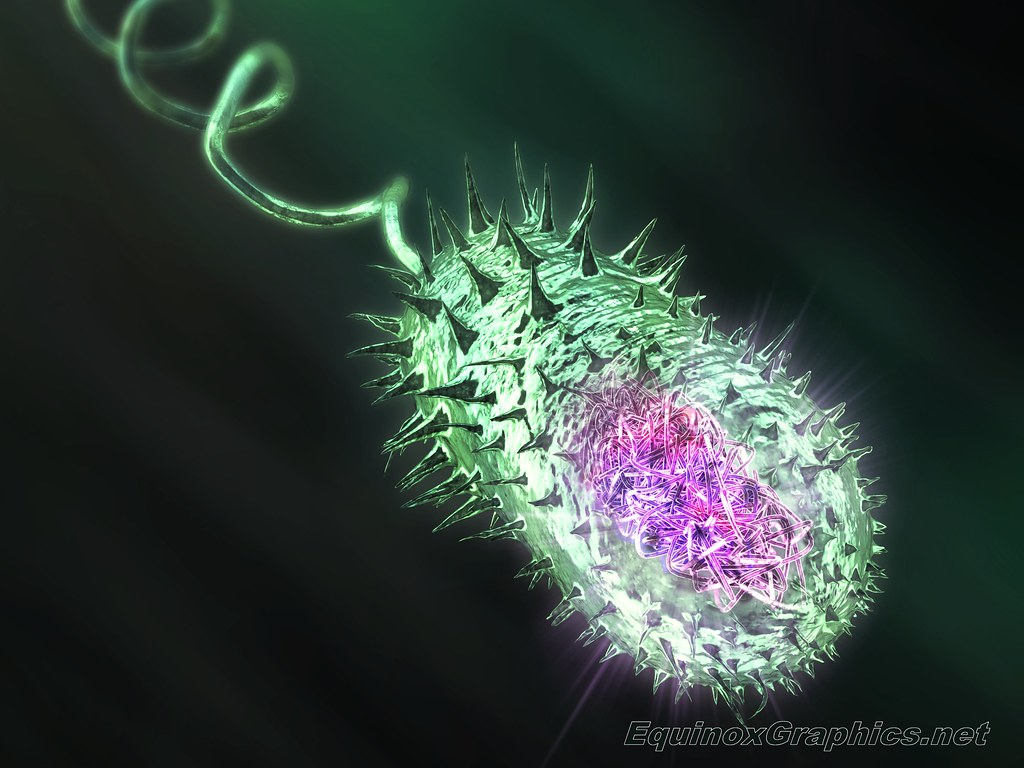 Image:Cholera Bacterium showing Nucleoid