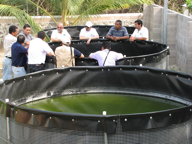 Construccion De Estanques Para Tilapia Of Estanques Para Cultivo De Tilapia En Planta De Cordes Bajo