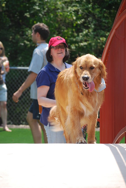 Newtown Dream Dog Park To Dental Town Johns Creek Ga