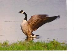 z. Bird and Nature Photographs