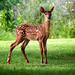 deer image, photo or clip art