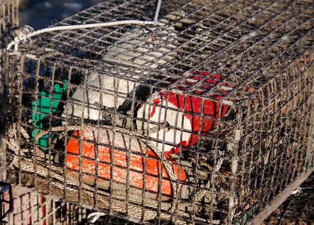 Best Lobster Trap Design