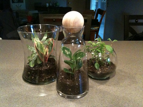 Glass Terrarium Trio