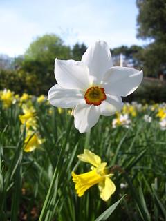 Narcissus Park