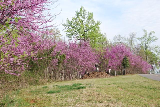 2010 Atlanta Spring Little Mullbery (30)