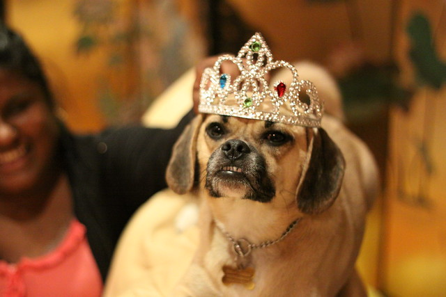 Dog in tiara. (Photo: Crystal Agozzio)