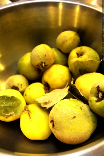 quince fruit from neighbors roger & lynn