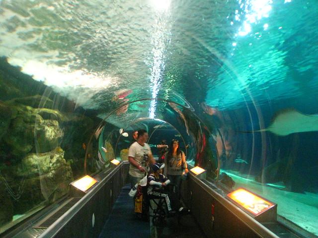 mall of america 39 s aquarium flickr photo sharing