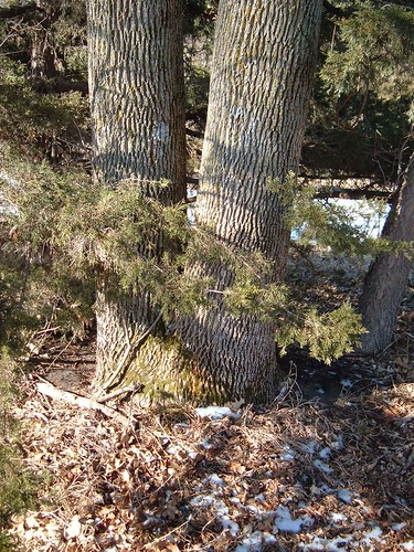 tree geocaching