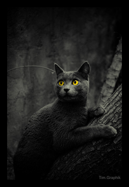 TheCats[2]