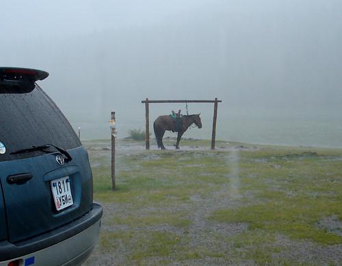 horse rain mongolia heavyrain arkhangai