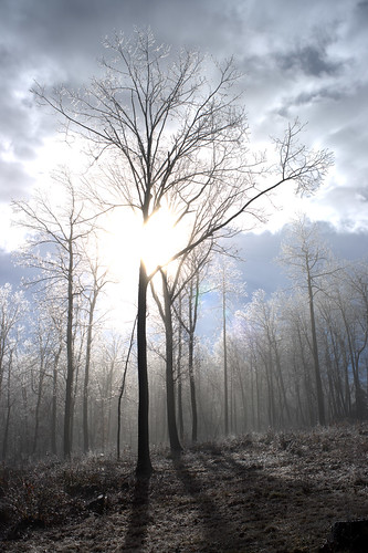 trees mist fog backlight landscape nebel icestorm freezingrain glazing