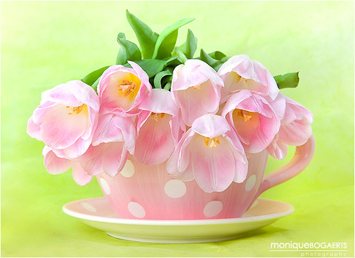 Teacup Tulips